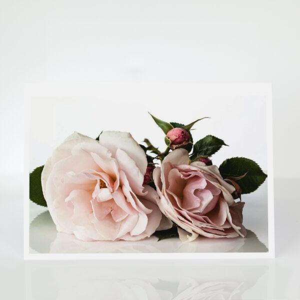 Elizabeth Cassons Card