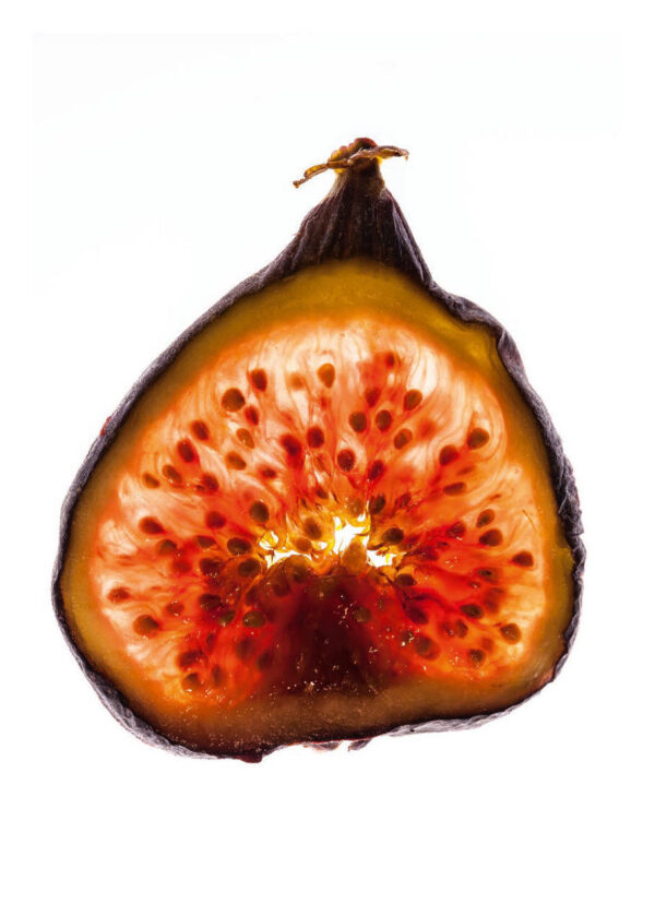 Fig Slice
